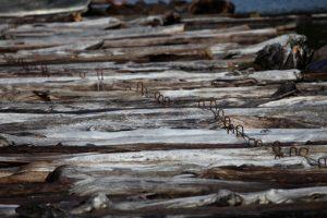 Huon Pine Tasmania
